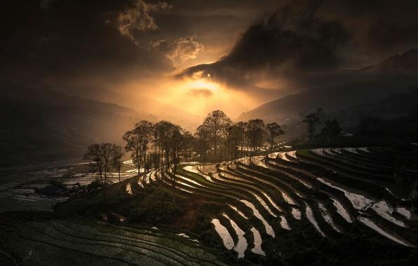 Picture Vietnam, Sapa, Rice Terrace