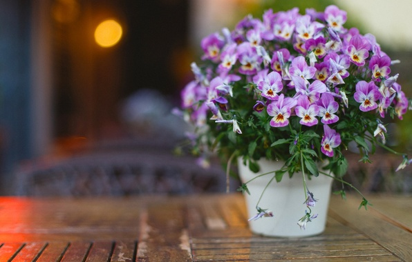 Picture eyes, bouquet, bokeh, viola, Viola tricolor, Daisy