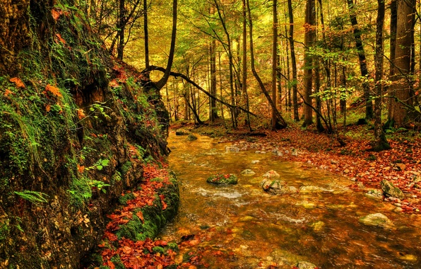 Picture greens, trees, river, stones, foliage, Forest