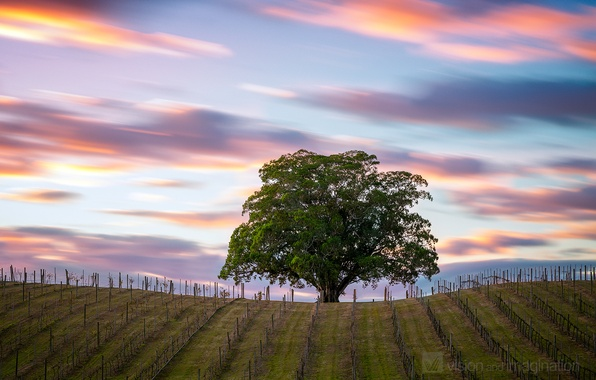 Picture field, the sky, clouds, tree, excerpt, Australia