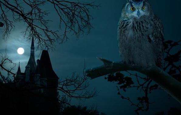 Picture night, castle, owl, dark, Halloween, moon, Halloween, the full moon, night, owl, hounted house