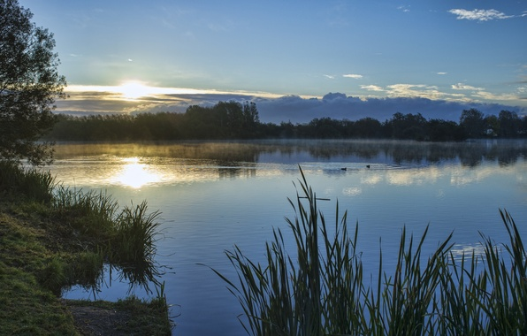 Picture the sky, grass, the sun, clouds, trees, sunset, lake, shore, duck