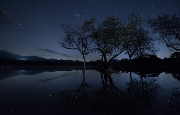 Picture the sky, stars, light, trees, branches, lake, reflection, mirror, silhouette, hill