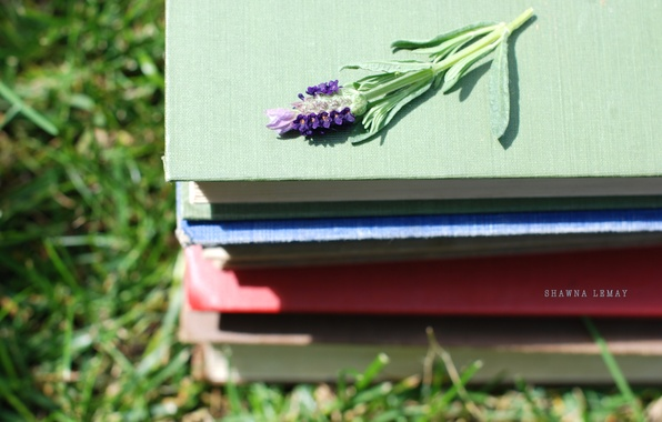Picture greens, grass, flowers, nature, background, Wallpaper, books, stack, different, wallpapers, flower