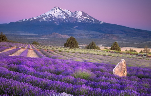 Picture field, landscape, flowers, mountains, Nature, lavender