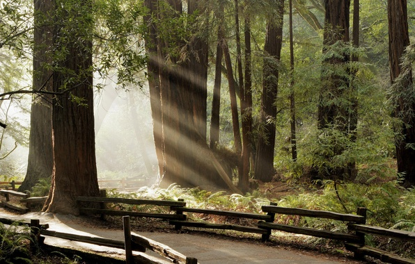 Picture forest, rays, path