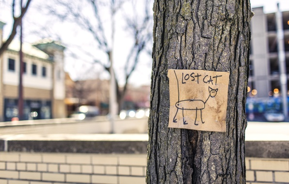 Picture cat, tree, street, lost, humor, cat, ad, gone