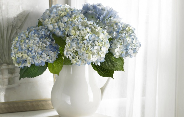 Picture flowers, purity, bouquet, picture, blue, vase, white