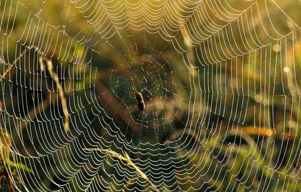 Picture drops, web