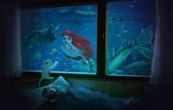 Picture cat, fish, mermaid, sleep, turtle, window, Room, book, child