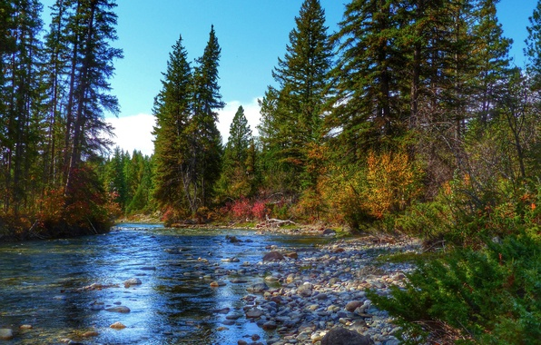 Picture autumn, forest, the sky, trees, river, stones, spruce