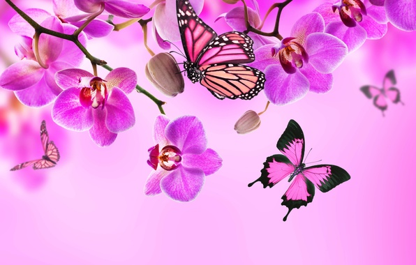Picture butterfly, flowers, Orchid, pink, blossom, flowers, beautiful, orchid, butterflies