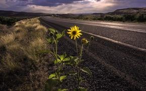 Picture road, flower, landscape