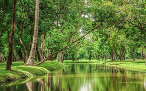 Picture trees, landscape, nature, river, beauty, Thailand