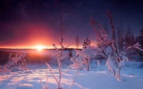 Picture winter, the sun, snow, sunset, Bush, the snow