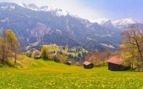 Picture Field, Mountains, Trees, Switzerland, Village, Slope, Switzerland