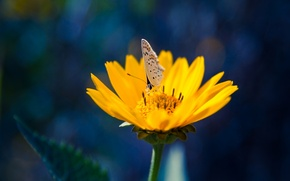 Picture flower, butterfly, yellow, petals, insect