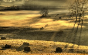 Picture field, light, landscape, fog, morning