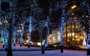 Picture trees, street, lights, garland