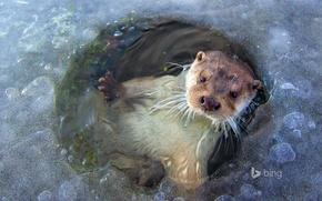 Picture ice, Netherlands, otter, polynya, Lelystad