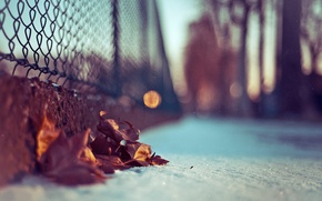Picture leaves, macro, snow, photo, background, Wallpaper, blur, bokeh