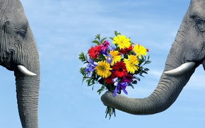 Wallpaper BACKGROUND, PAIR, The SKY, FLOWERS, ELEPHANT, BOUQUET, LOVE, BLUE, The ELEPHANT, TRUNK, TUSKS, COURTSHIP, ELEPHANTS