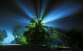 Picture road, rays, light, night, tree, lantern