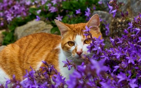 Picture cat, flowers, red