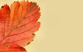 Picture sheet, paint, autumn, nature