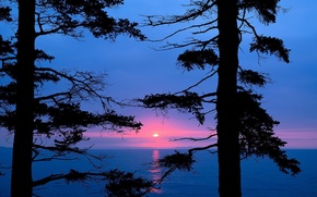 Wallpaper lake, trees, branches, sunset