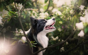 Picture branches, dog, the bushes, bokeh
