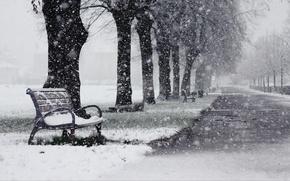 Picture Park, snow, shop, winter, alley, trees