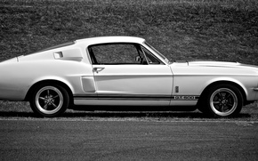 Picture Mustang, Ford, Shelby, GT500, Muscle car
