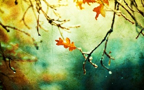 Picture autumn, macro, nature, sheet, branch, canvas, touch