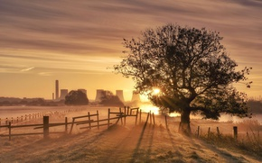 Picture light, fog, tree, morning