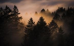 Picture landscape, sunset, nature, fog