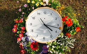 Picture grass, flowers, arrows, watch, dial