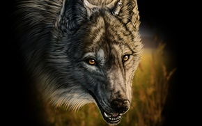 Picture grass, wolf, fangs, art, wolfroad