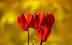 Picture flowers, nature, plant, petals, exotic