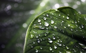 Picture drops, macro, leaf