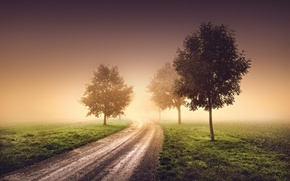 Picture road, trees, nature, fog, morning, haze