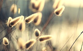 Picture summer, the sun, rays, light, nature, stems, plants, fuzzes