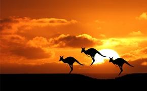 Picture the sun, kangaroo, Australia, silhouette