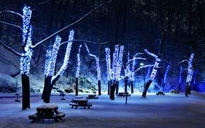 Wallpaper illumination, snow, trees