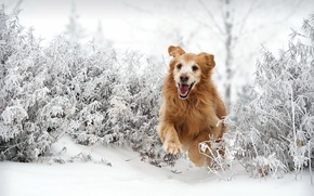 Picture winter, each, dog