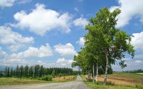 Picture road, forest, summer, clouds, trees, birch