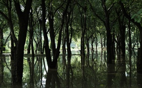 Picture forest, water, trees, swamp