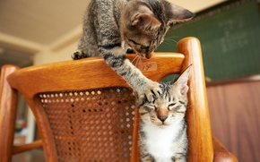 Picture cats, the game, paw, chair