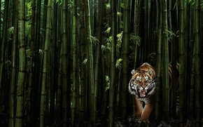 Picture greens, tiger, 149, bamboo