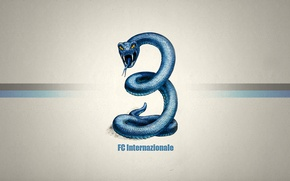 Picture Snake, Texture, Inter, International
